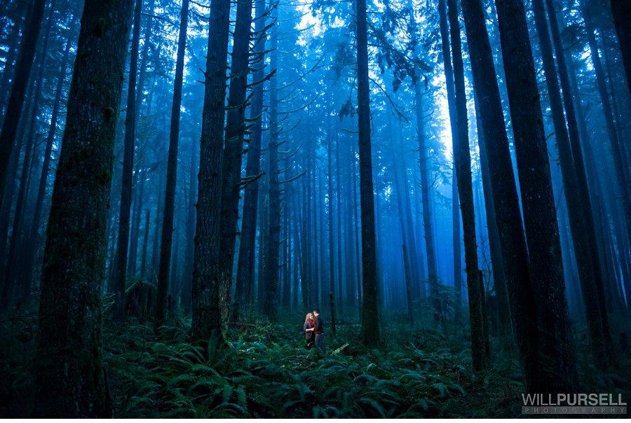 foggy forest photos