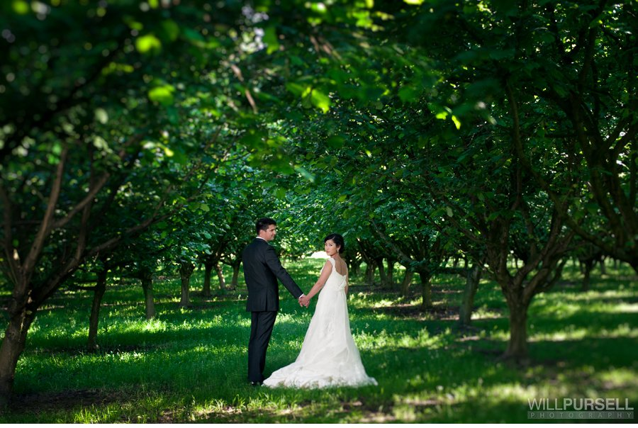hazelnut farm wedding portraits