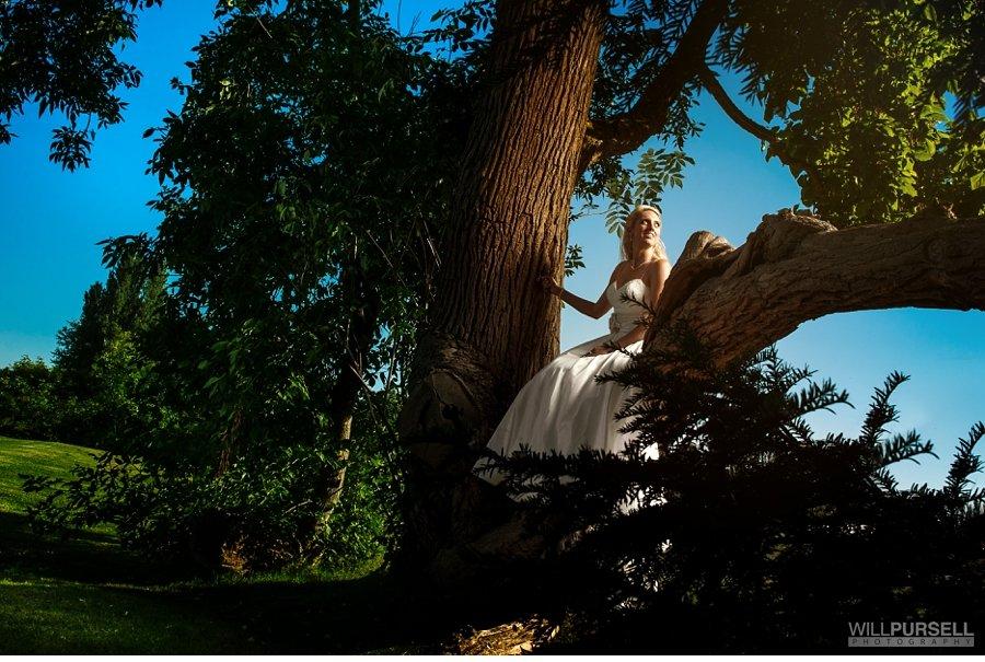 bride in tree photo