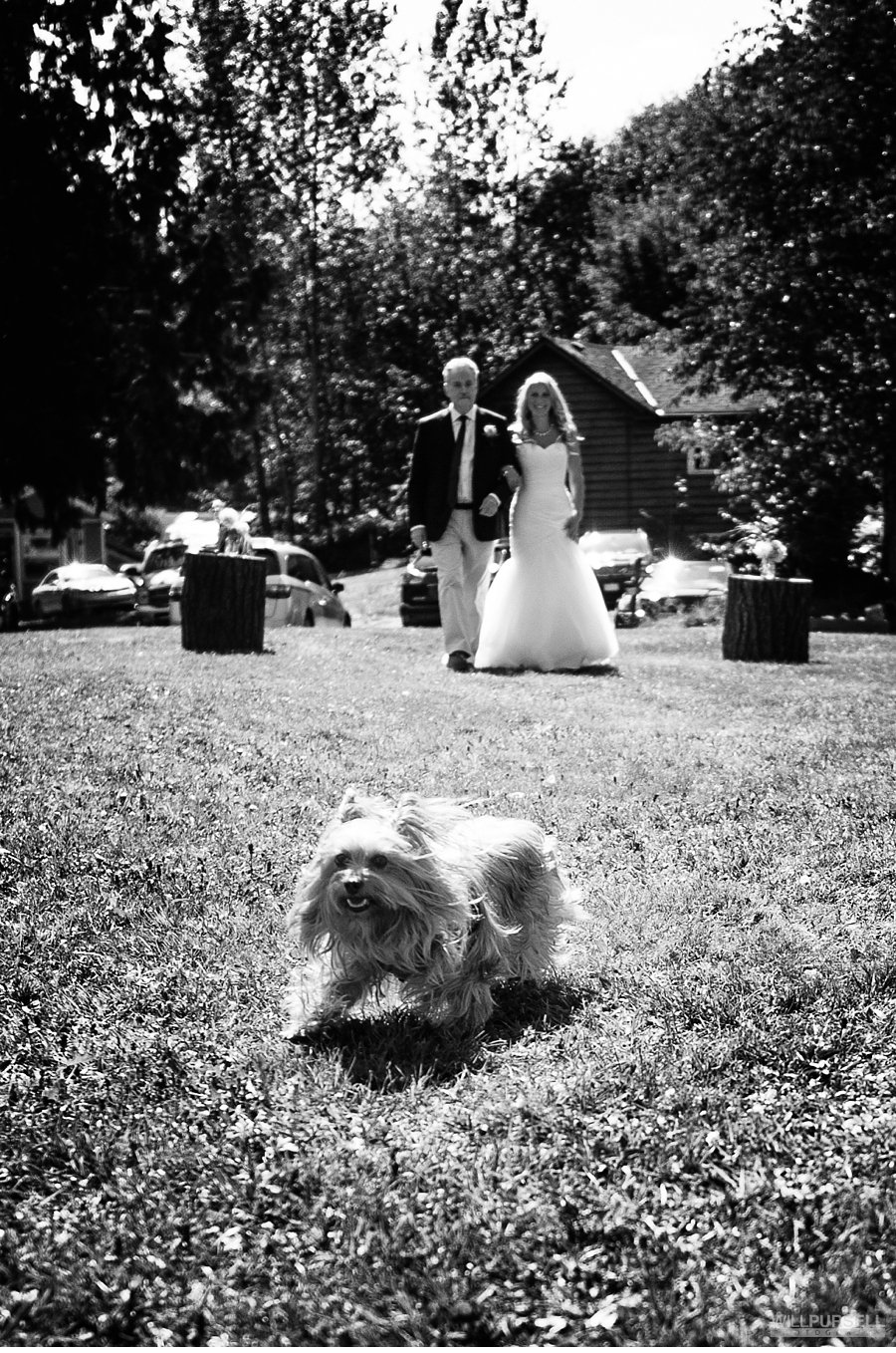bride walking towards outdoor ceremony with dog off leash