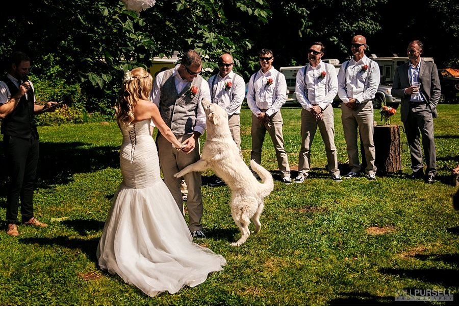 dog jumps up during casual outdoor ceremony