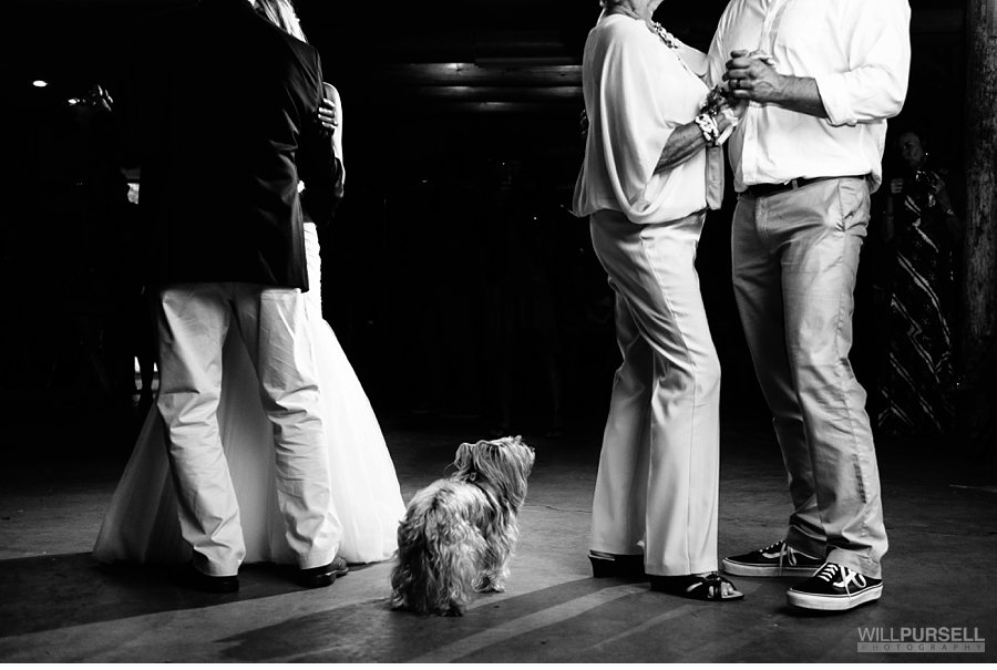 dogs indoors at wedding reception first dance