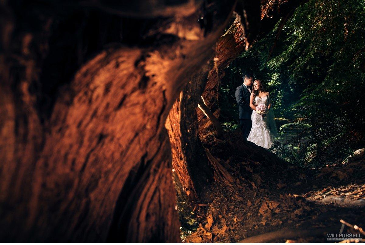 Stanley Park trees wedding