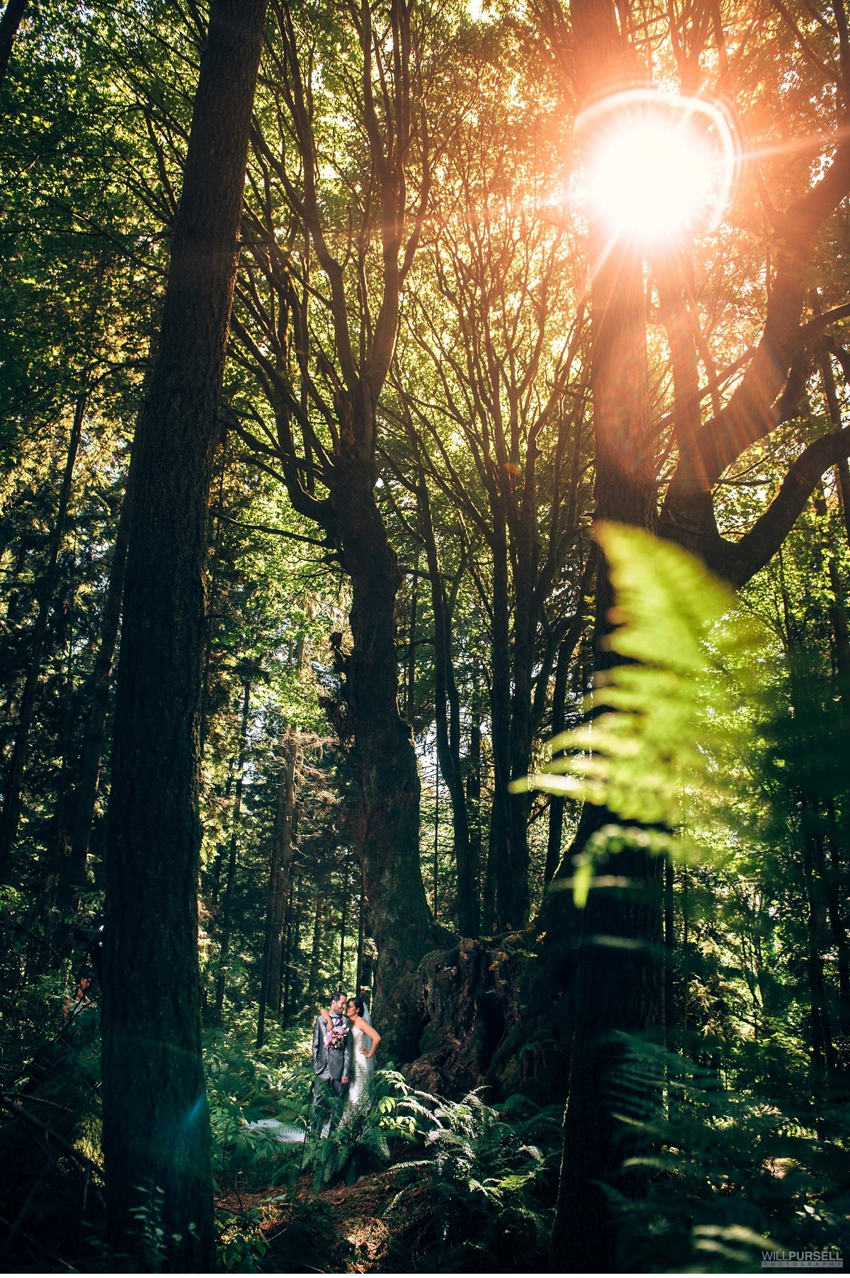 vancouver rainforest wedding